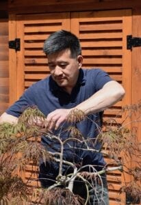 Russ Poon prunes an Acer palmatum 'Red Dragon' Cutleaf Japanese Maple in his garden.