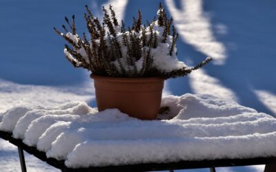 Welcome to the world of winter landscaping